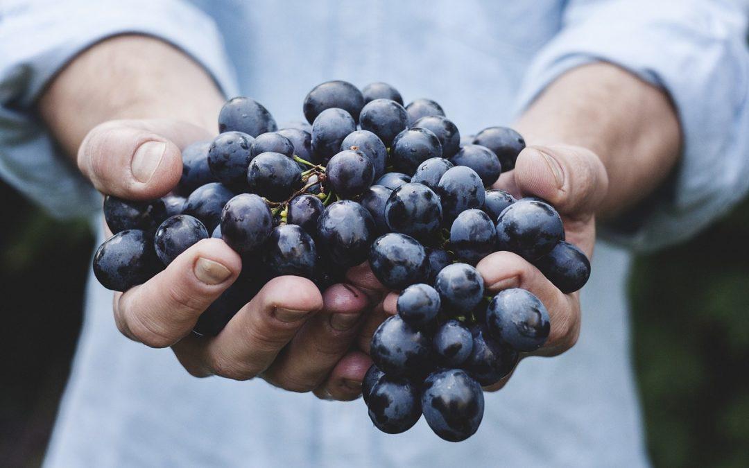 28 GENNAIO | Inaugurazione Wine Shop Domini Veneti By Wine&Coffee